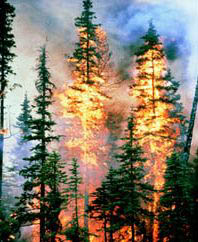 THE-TYEE-ANNIVERSARY-FOREST-FIRE